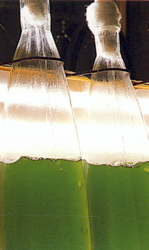 chlorella being generated